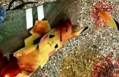 pokemon-opfer-pikatchu_p